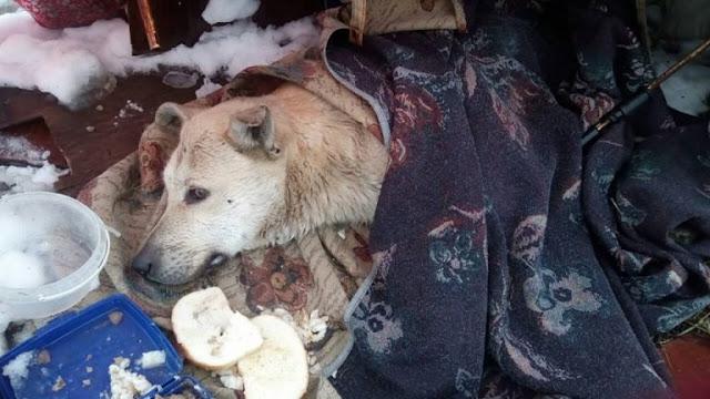 Бездомный пёс лежал в парке и тихо угасал от ранений… Люди шли мимо