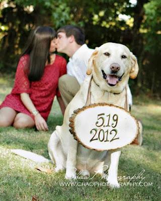 invitación boda mascota perro