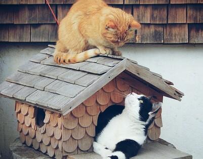 Cara Merawat Kucing Persia Agar Gemuk Dan Sehat Hobinatang