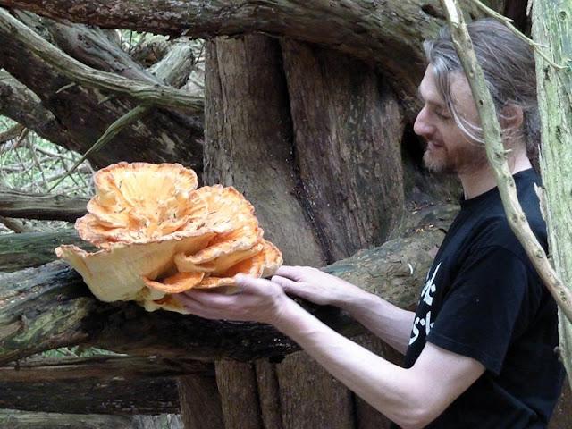 Magic of Mushrooms Can Prevent Depression