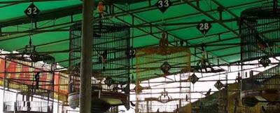 Manpaat Dan Kisaran Harga Terbaru Vitamin Burung Lomba Saat Ini Paling Lengkap
