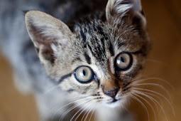 56 Arti Mimpi Kucing Menurut Primbon Jawa Terlengkap
