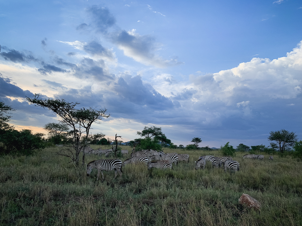 Safari Serengeti National Park Review