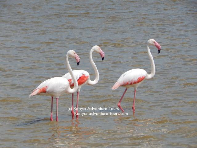 Flamingos in Lake Nakuru National Park - Kenya Adventure Tours