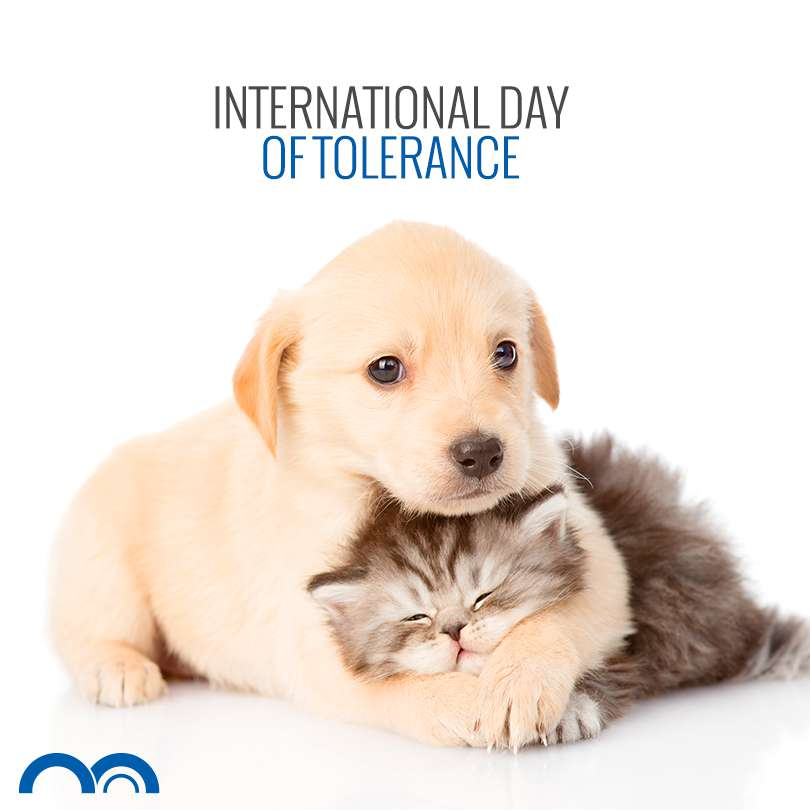 International Day For Tolerance Wishes Unique Image