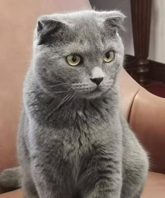 Chinese Ambassador to the Philippines Huang Xilian has 2 cats