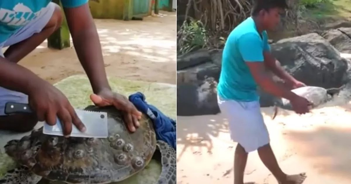 Videos Show Man Saving Local Sea Turtles From Unnecessary Suffering
