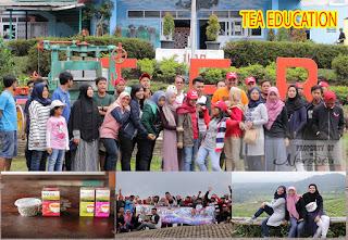 Tea Walk Di Perkebunan Teh Ciater Subang