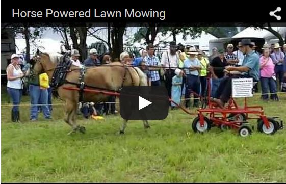 Horse pulls riding lawn mower assembly as rider holds the reins