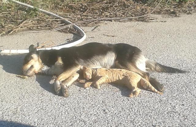 Στυλίδα: Έριξαν φόλες σε σκυλιά και γάτες στο Λιμανάκι στο Βαθύκοιλο