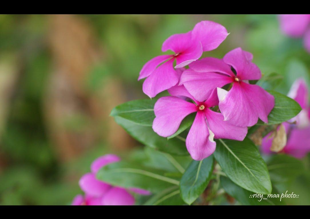 Inspirasifoto  Pelbagai Jenis Bunga