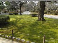 This is moss, not a lawn - Kenroku-en Garden, Kanazawa, Japan