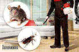 شركة تنظيف حشرات بجدة , رش الحشرات بمكة