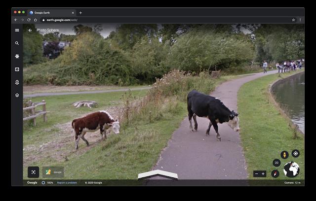 Google Earth Screenshot, der Kühe auf einer Straße zeigt