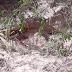 Corpo de mulher é encontrado na zona rural de Lagoa Grande do Maranhão