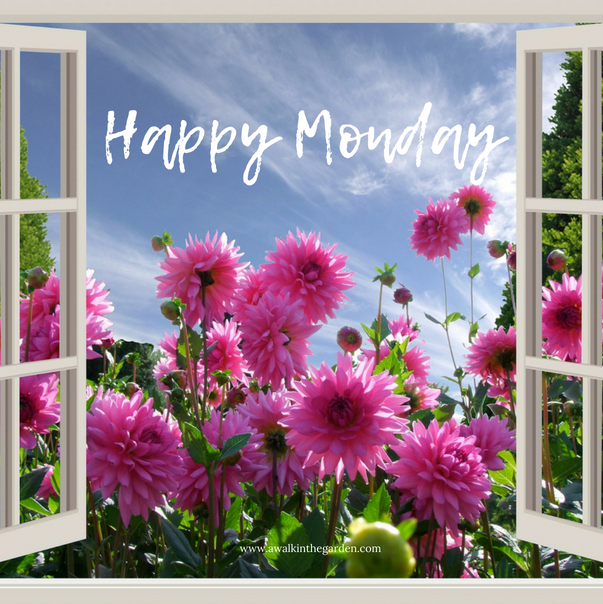 A walk in the garden happy monday greetings happy monday greetings m4hsunfo