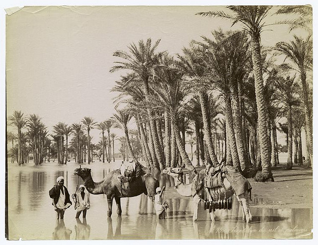 Inundation du Nil et palmiers. Photographer: Zangaki. 1860s-1920s. The New York Public Library. Photography Collection, Miriam and Ira D. Wallach Division of Art, Prints and Photographs.
