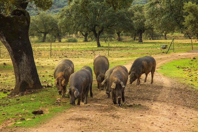 Los Pedroches Ham Routes iTravy