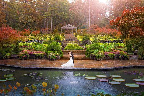 Lily Pads at Sara P. Duke Gardens
