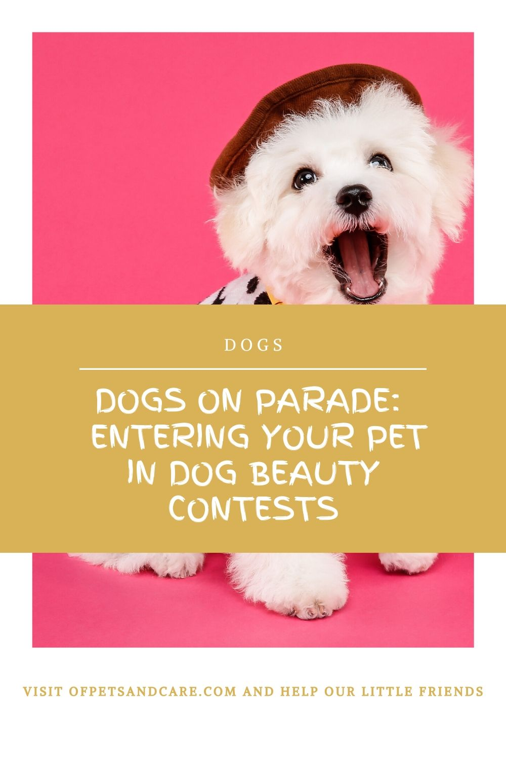 Dogs on Parade: Entering Your Pet in Dog Beauty Contests