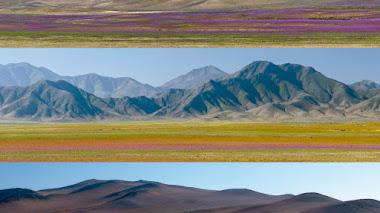 ¿Qué hacen en MI desierto estas malditas plantas? Día Internacional de la Fascinación por las Plantas 2021