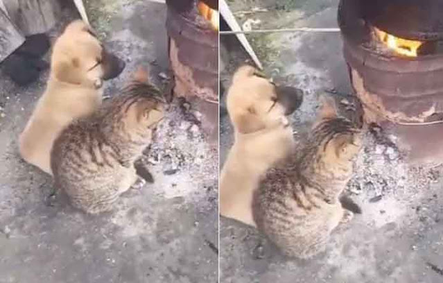 viral-video-of-puppy-and-kitten-warming-themselves