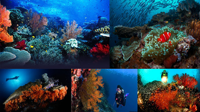 scuba diving, snorkeling, Raja Ampat, hidden paradise, honeymoon, diving in Raja Ampat, honeymoon in Raja Ampat, Papua