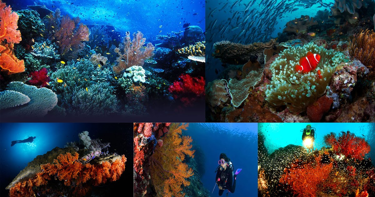 Diving and holiday in Raja Ampat, the hidden paradise