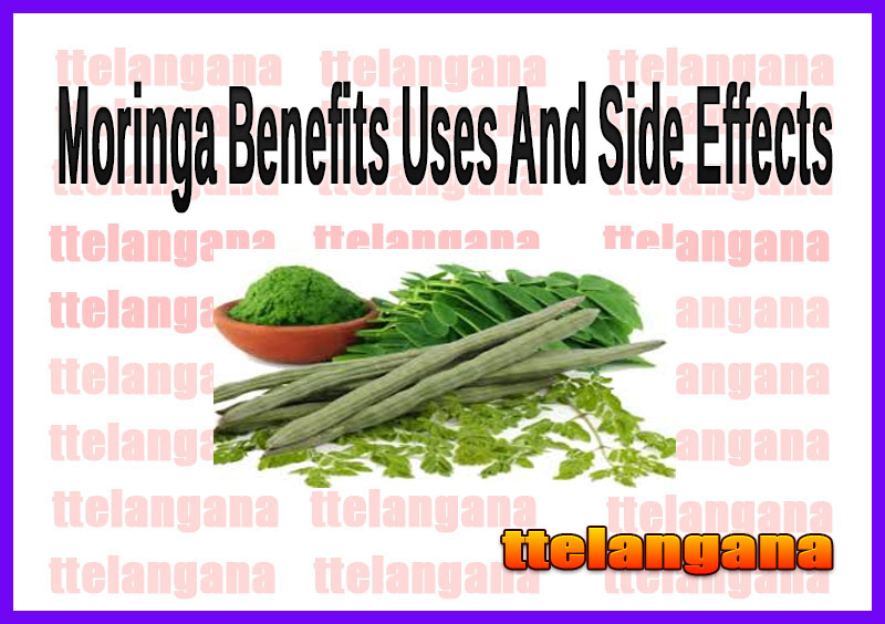 Moringa Benefits Uses And Side Effects