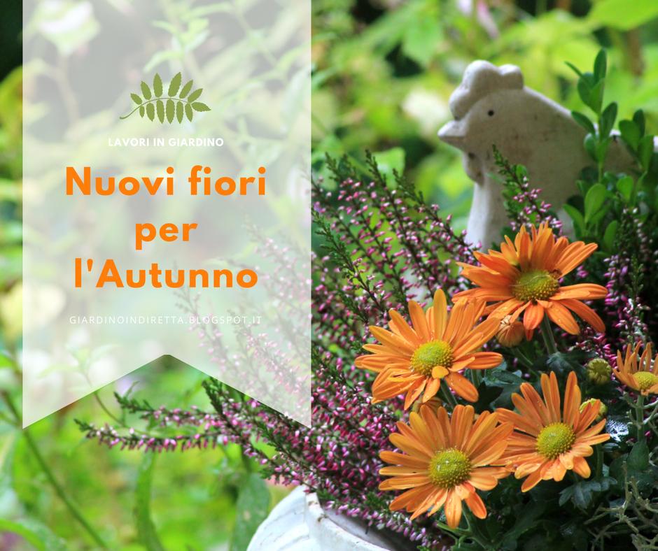 Nuovi fiori per l 39 autunno un giardino in diretta for Fiori in giardino