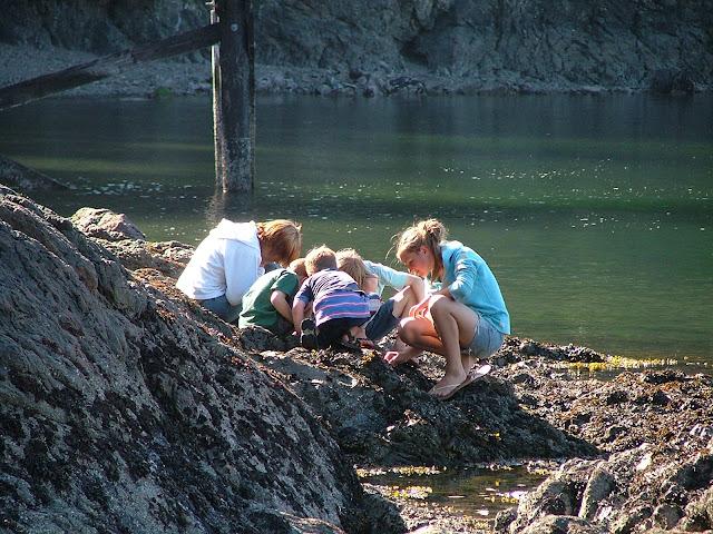 Jones Island State Park tidepools