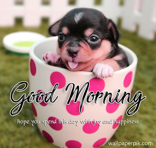 good morning images new good morning 4k hd images good morning wishes good morning all images