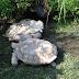 No creerás lo que esta tortuga hace por otra tortuga en apuros