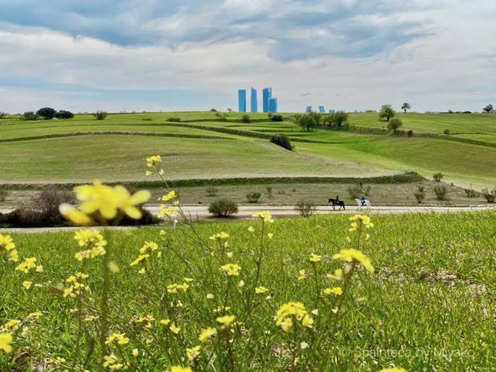 マドリードの高層ビルと野原