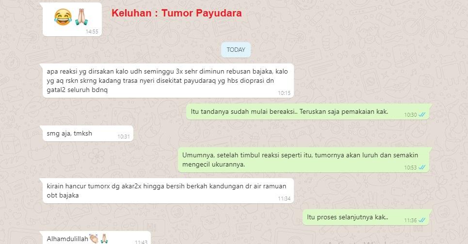 kayu bajakah obat kanker