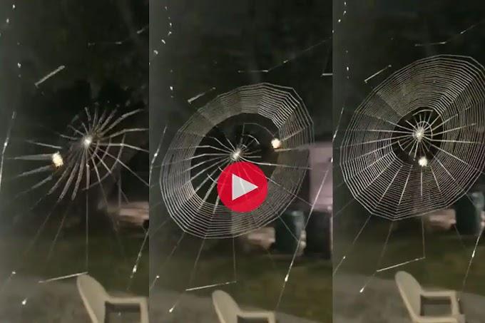 Viral Video : मशीन की रफ्तार से मकड़ी ने बुन दिया जाल, वायरल हो रहा ये वीडियो