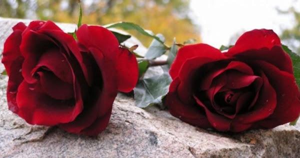 Λαμία : «Έφυγε» από κορωνοϊό 53χρονος – το «αντίο» των συναδέλφων του