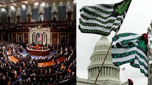 واشنطن تفتح نظامها المصرفي أمام عائدات الماريجوانا