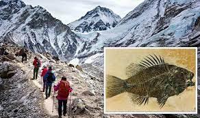 Encontraram fósseis marinhos no alto do Monte Everest