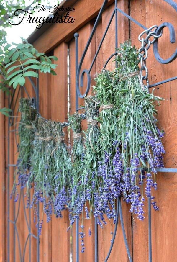 Fresh Lavender Bundles For Drying