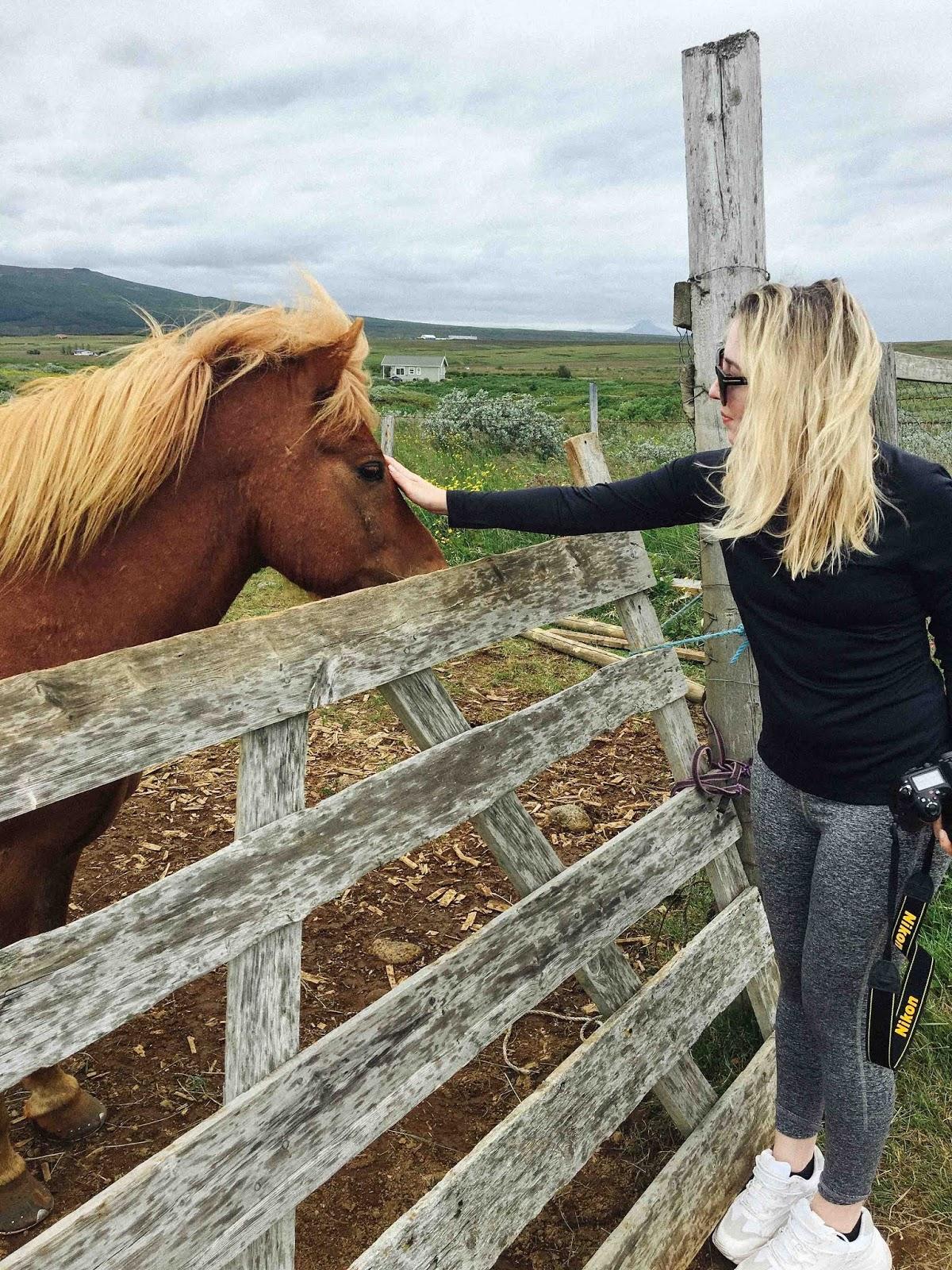 iceland and icelandic horses travel blog