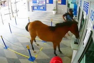 Cavalo invade casa lotérica e assusta funcionários e clientes em Cuité; veja vídeo