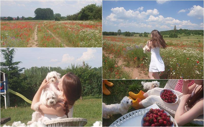 blog o domu na wsi