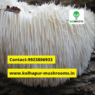 Oyster Mushroom Powder buyers