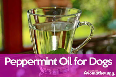 Peppermint Oils and Dogs