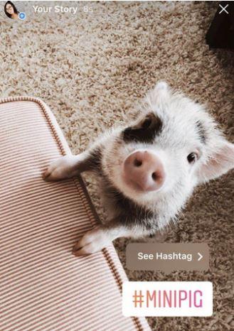 grow instagram engagement stories hashtags getinsta