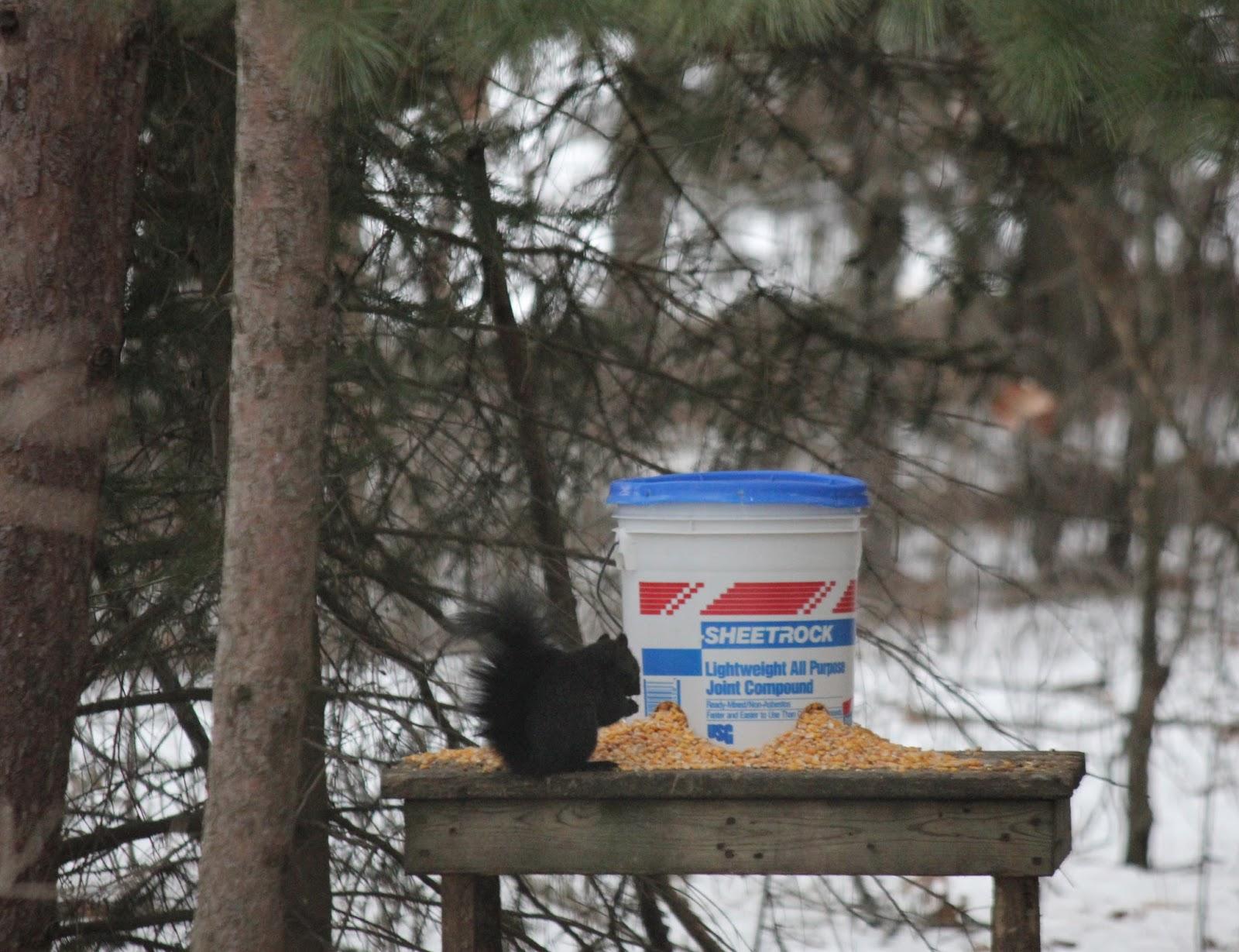hunter hanging bucket index ts deer product feeder american digital gallon