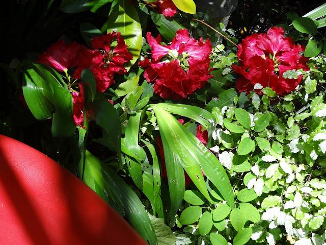 joli mois de mai, le jardin fait à son gré - Page 4 DSC07731