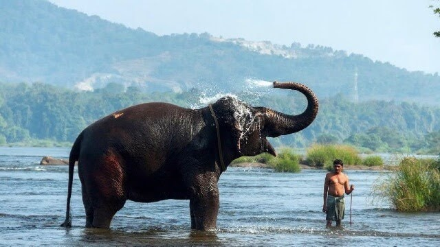 Elephant Pass Ayurveda and Yoga Retreat