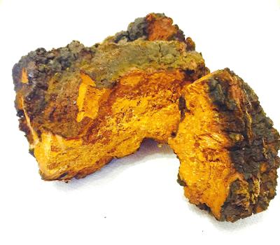 Chaga Mushroom Company in Gujarat